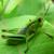 蝗虫:田野里的小精灵-第05集