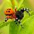 蜘蛛:聪明的纺织高手-第10集