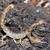 蝎子:神秘的隐居者-第06集